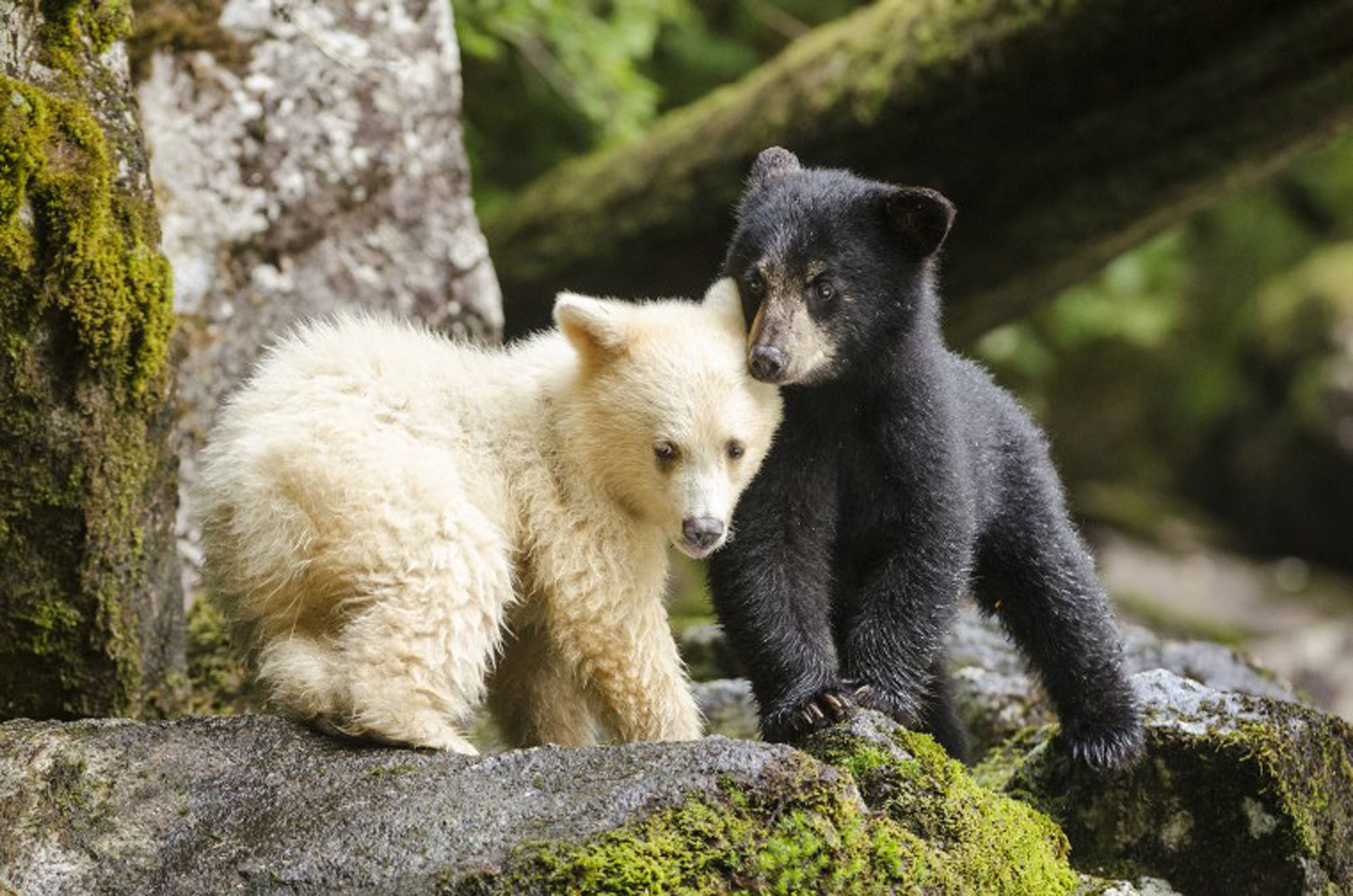 British Colombia - The Great Bear Rainforest